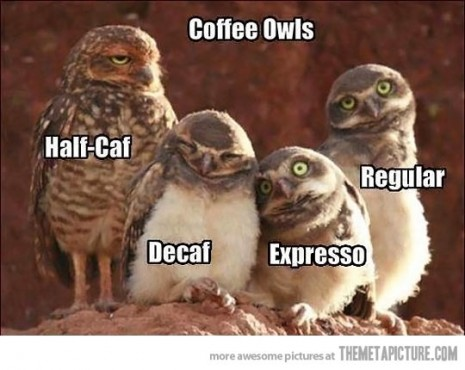 funny-owl-group-coffee-465x370